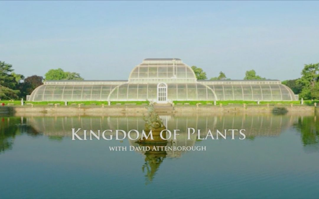 Kingdom of Plants 3D