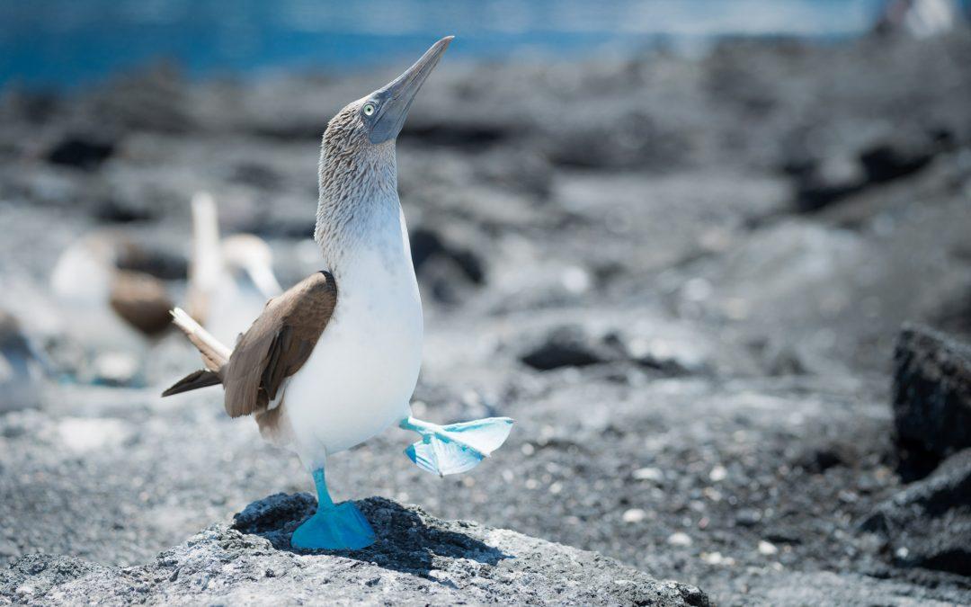 Galapagos on BBC1