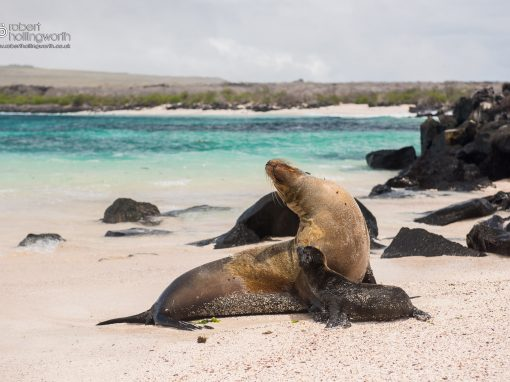Galapagos (Intrepid)
