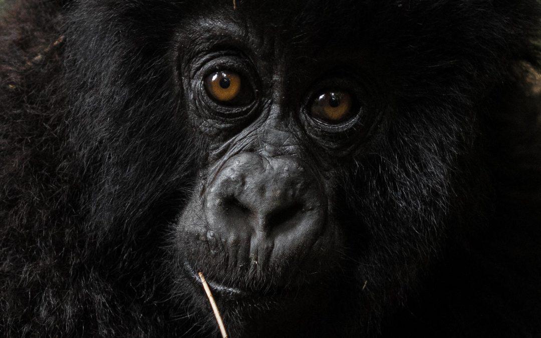 Rwanda Tourism films